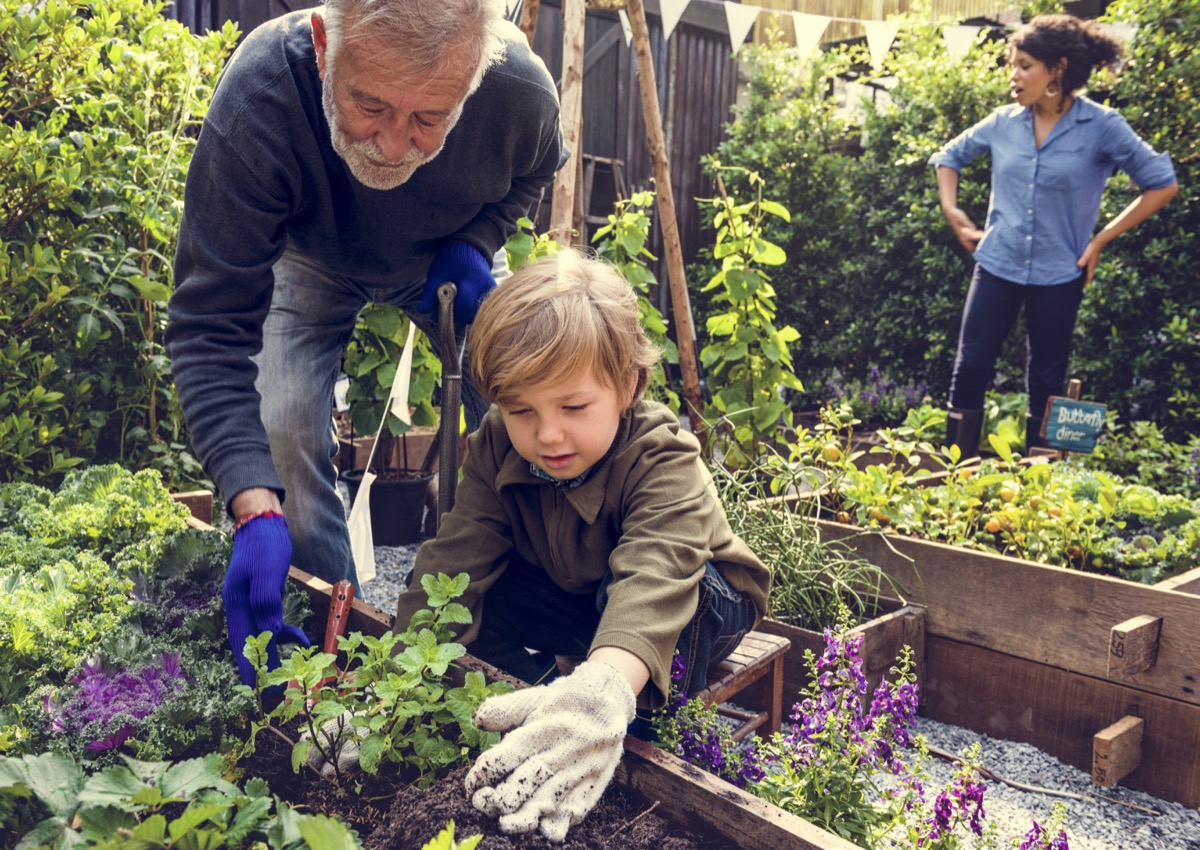 Older man and child planting in a garden together