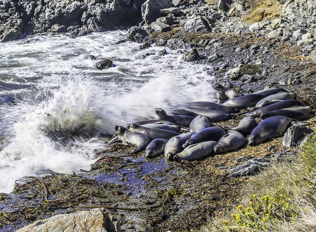 elephant seals on a beach