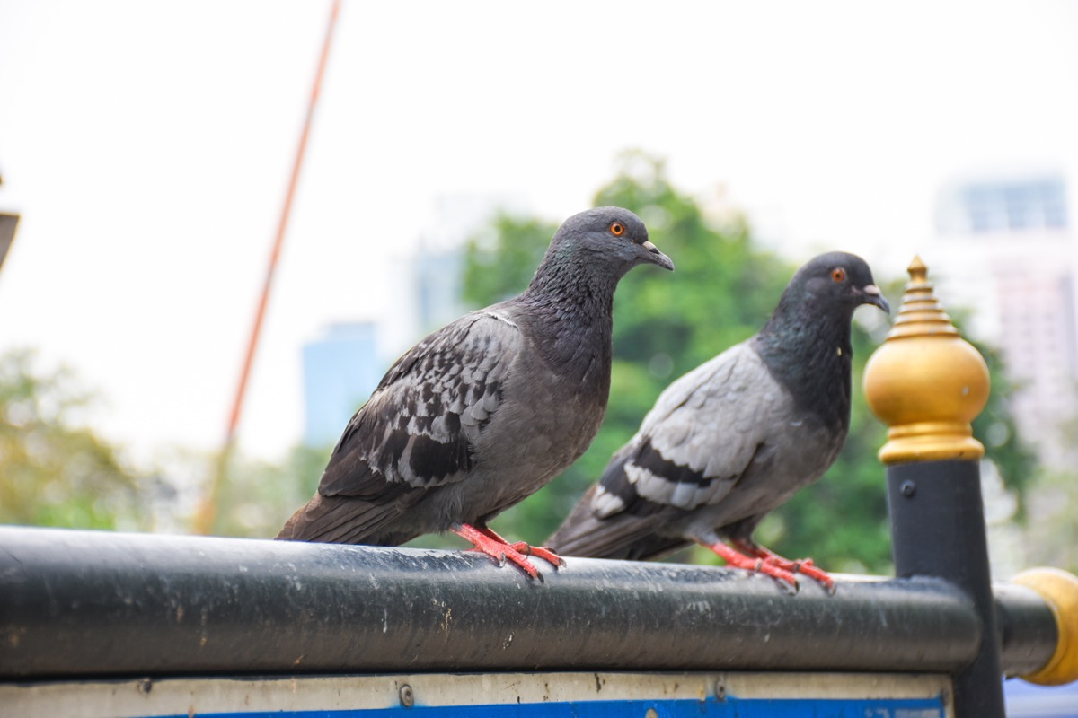 Pigeons chilling in an urban area