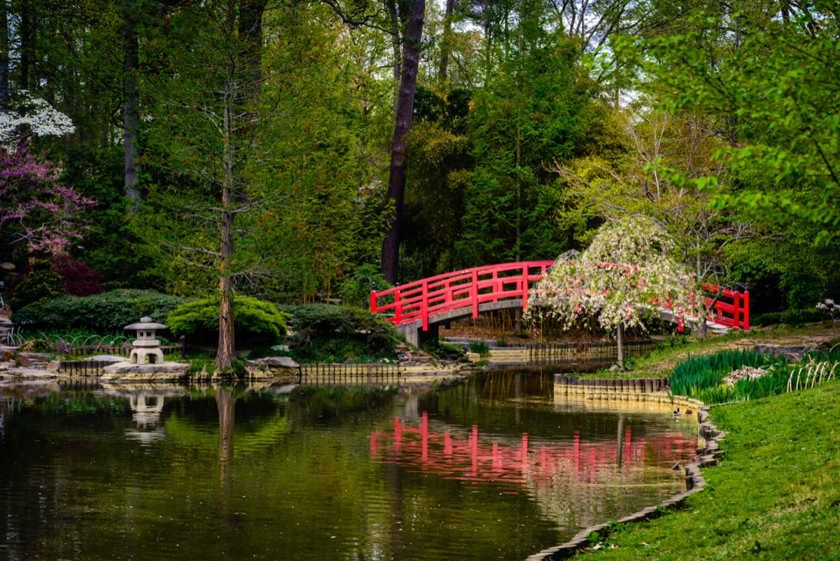 A red concrete bridge over a pond leading to the Sarah P. Gardens at Duke University in Durham, North Carolina