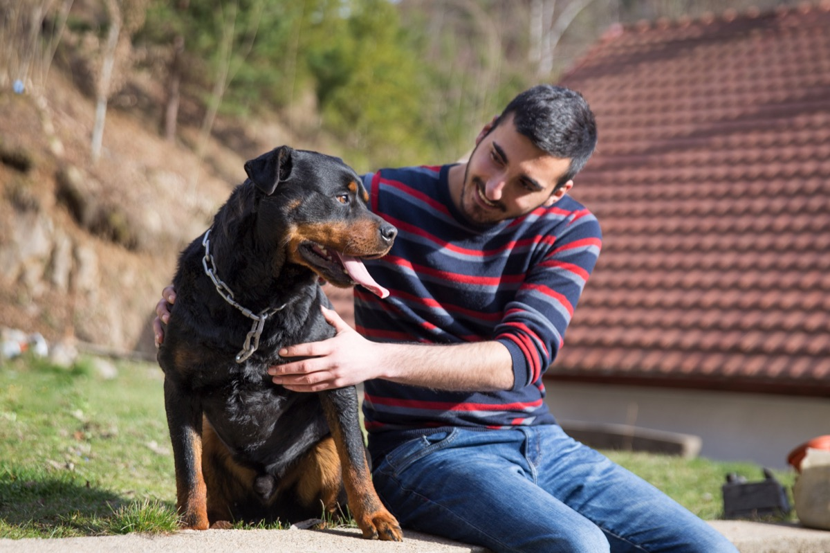 beautiful rottweiler and his owner enjoying the spring sunny day in the garden.