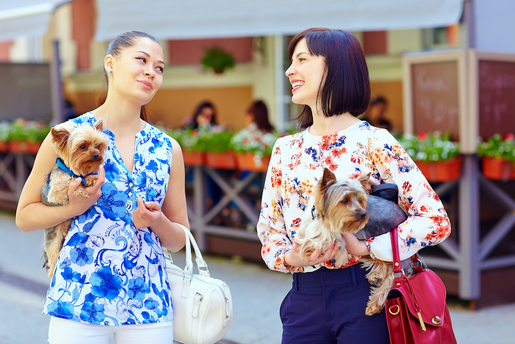 two women having a conversation while holding dogs