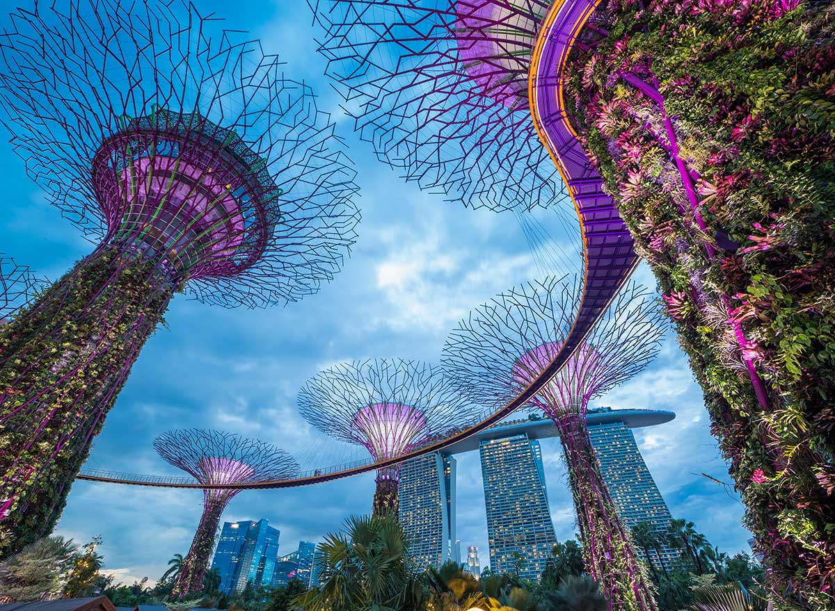 towers of plants touch the sky in a singapore park