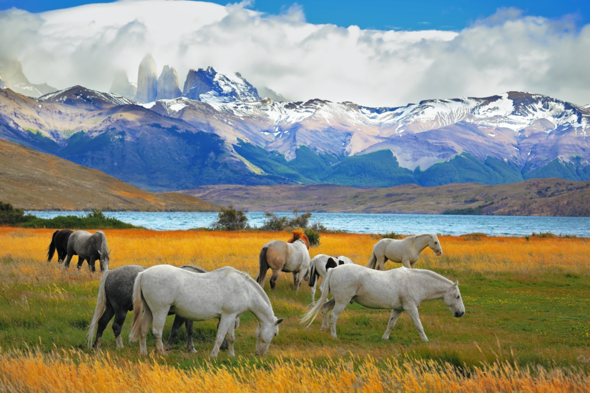 torres del paine chile with wild horses