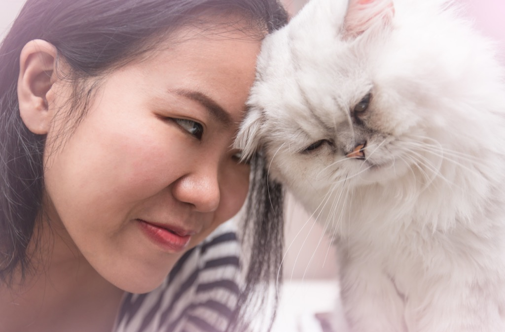 young asian woman with her pet persian cat bumping head together with love