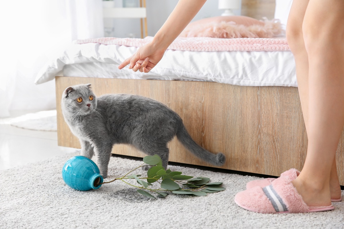 woman scolding gray cat who knocked over vase