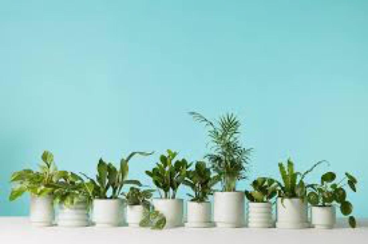 white jars of plants