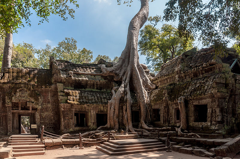 ancient religious monument of Angkor Wat where a tree grew on top of it Vietnam