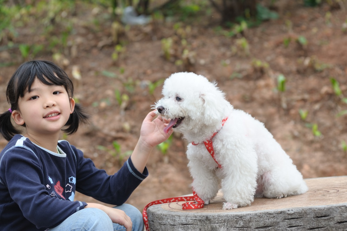 Asian kid playing with a poodle