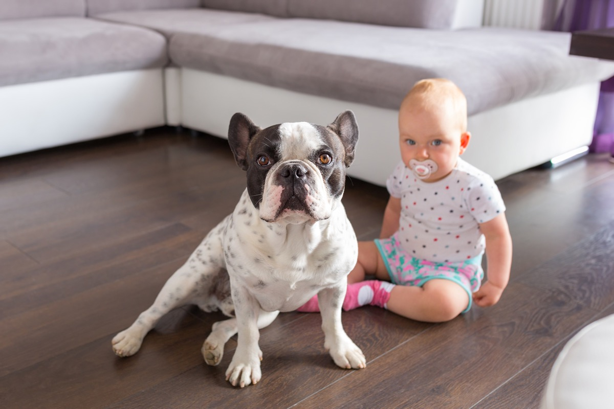 Baby and their dog