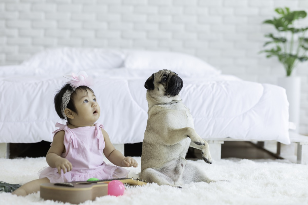 Baby and pug focused