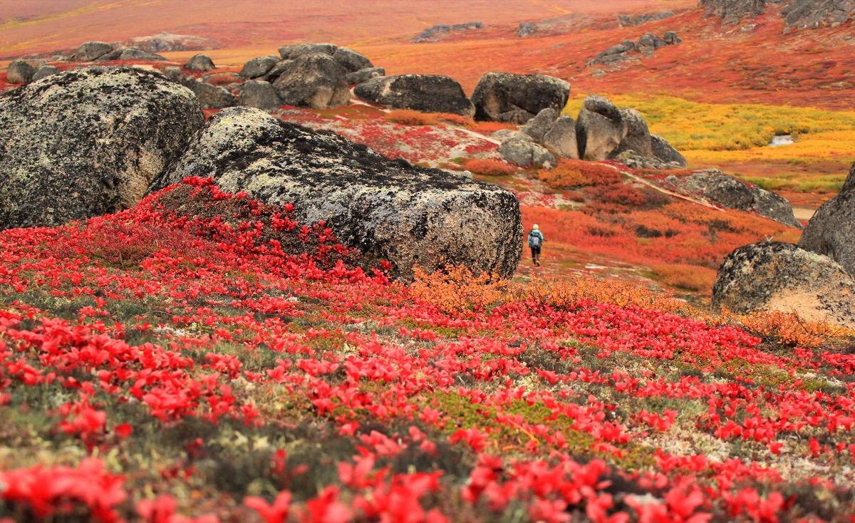 wildflowers covering bering land bridge preserve Alaska