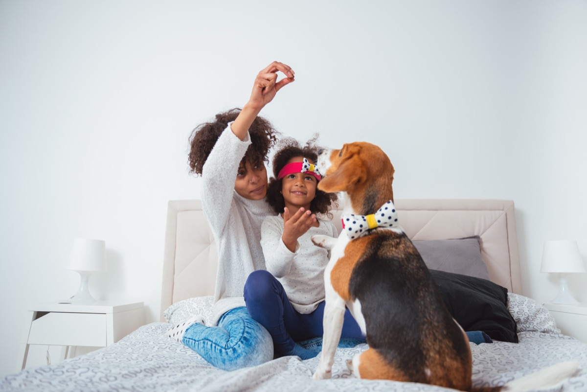 African american mother and daughter playing with their beagle dog