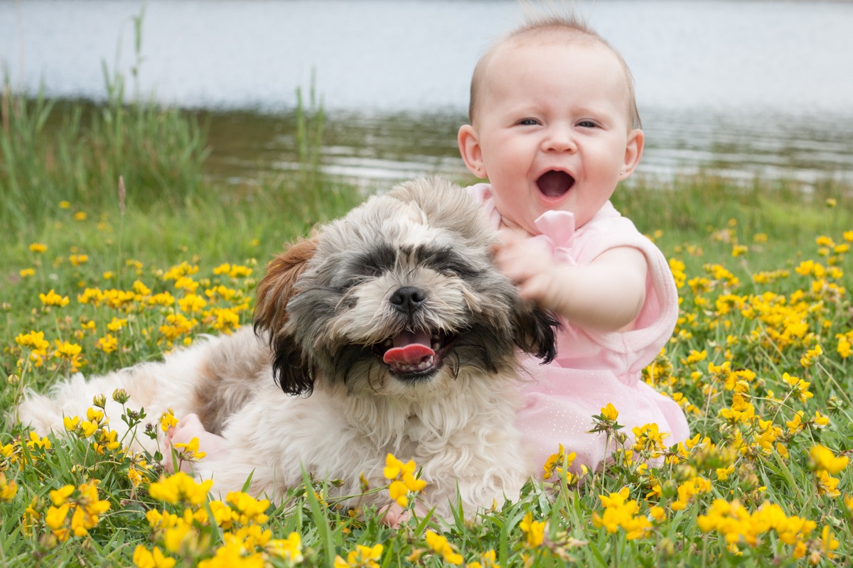 Dog and baby sitting in a field of flowers