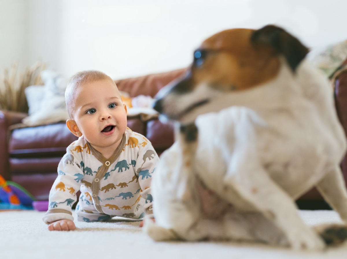 Baby following his dog