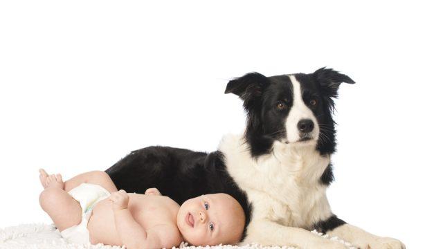 Dog and baby posing
