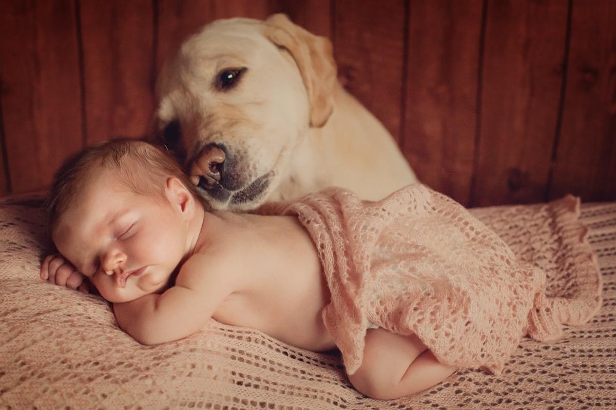 Dog comforting sleeping baby
