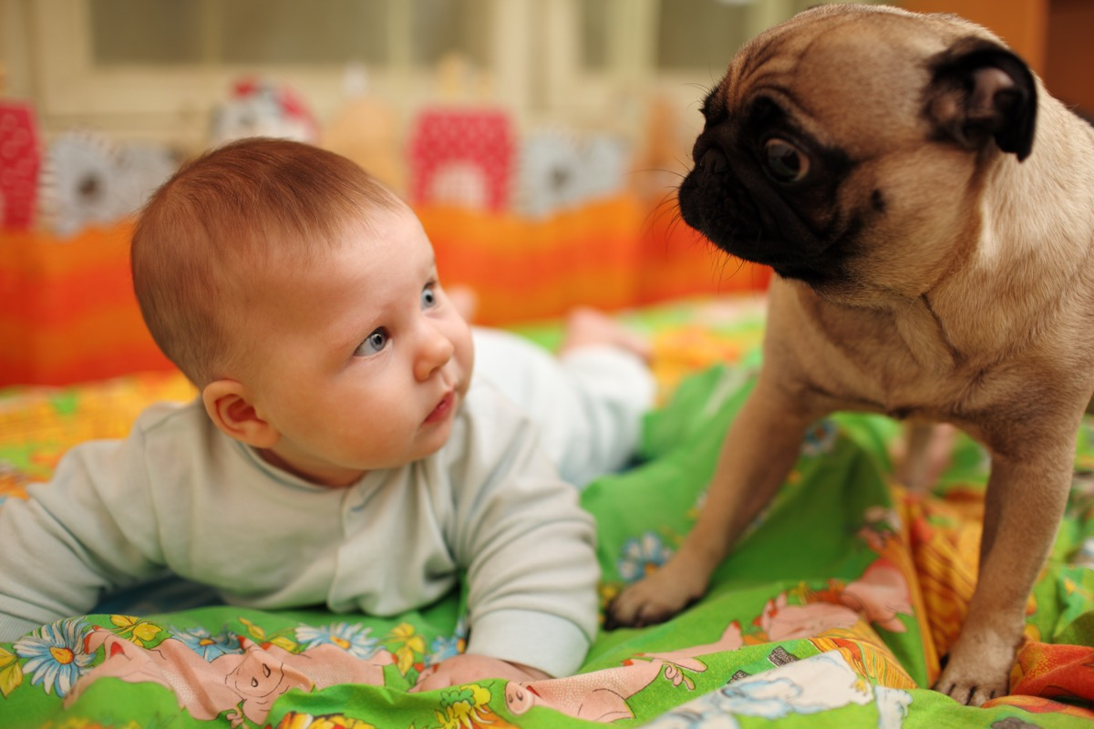 Baby and pug sharing an existential moment