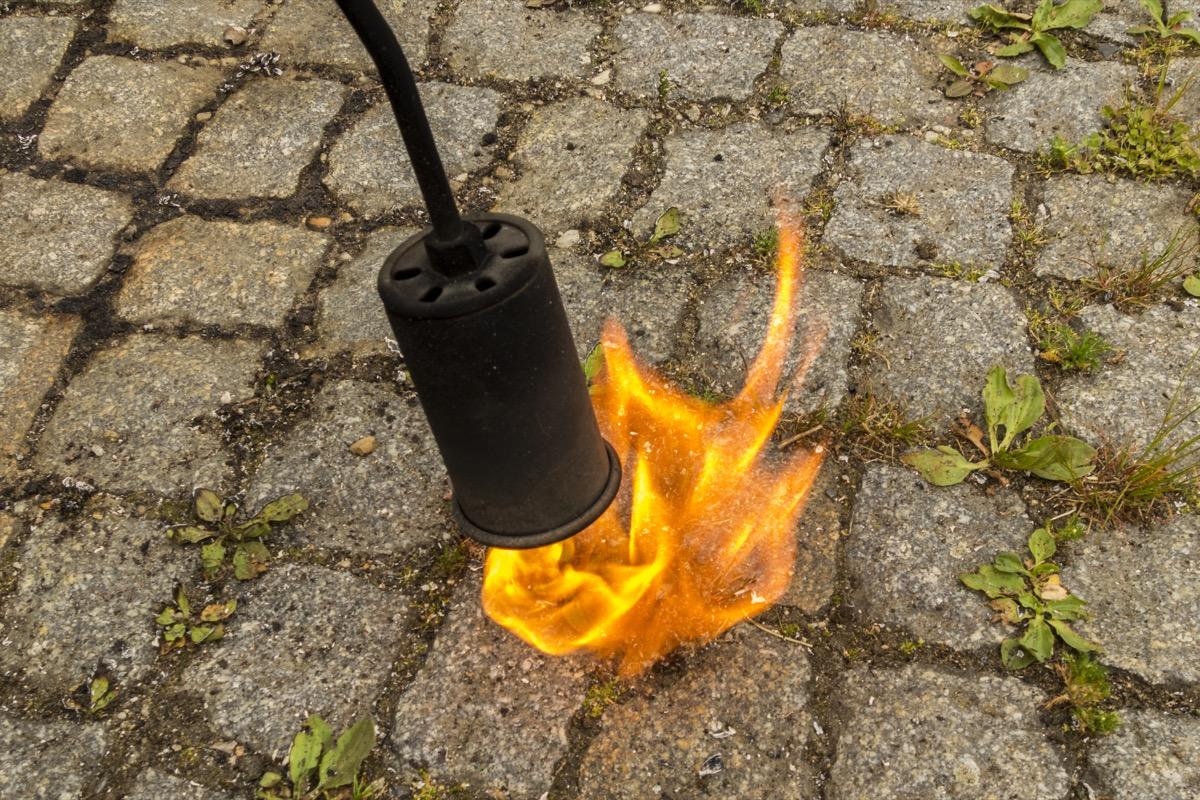 Flame weeding/thermal weeding