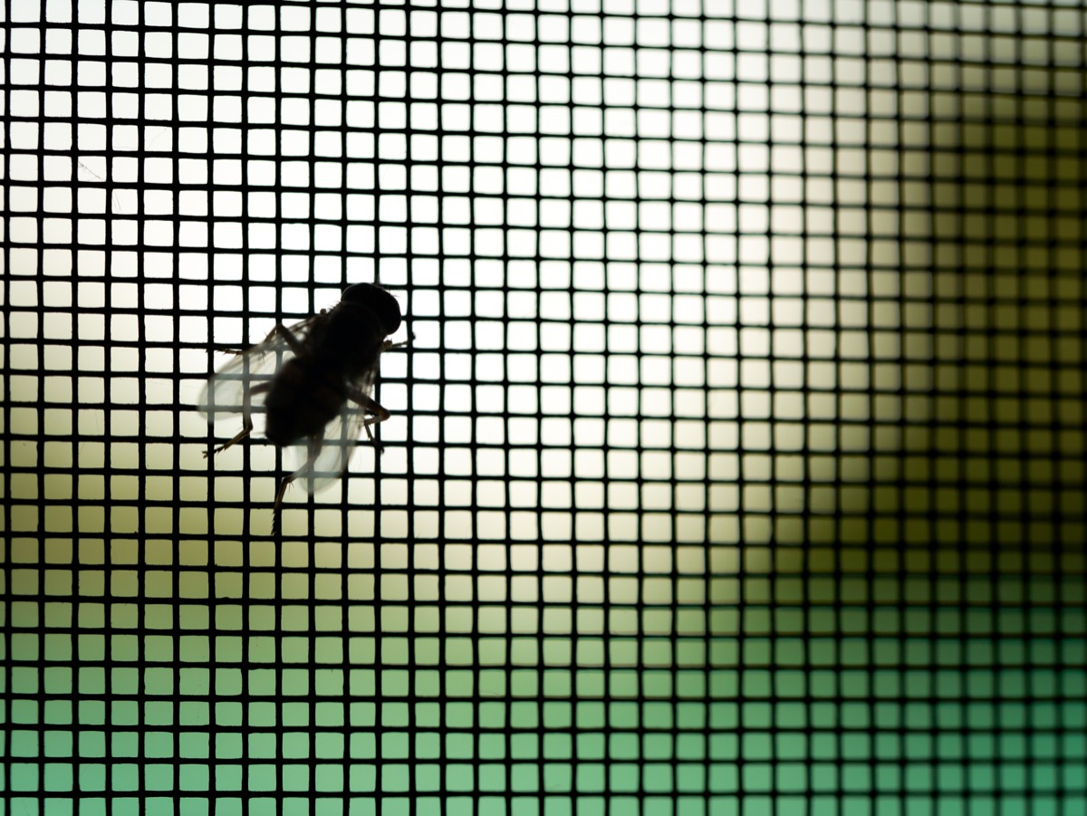 fly in home perched on door or window screen