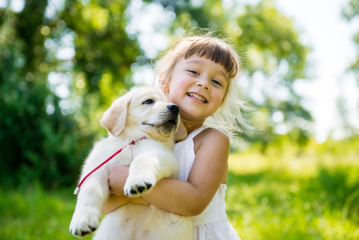 Golden retriever puppy with a child