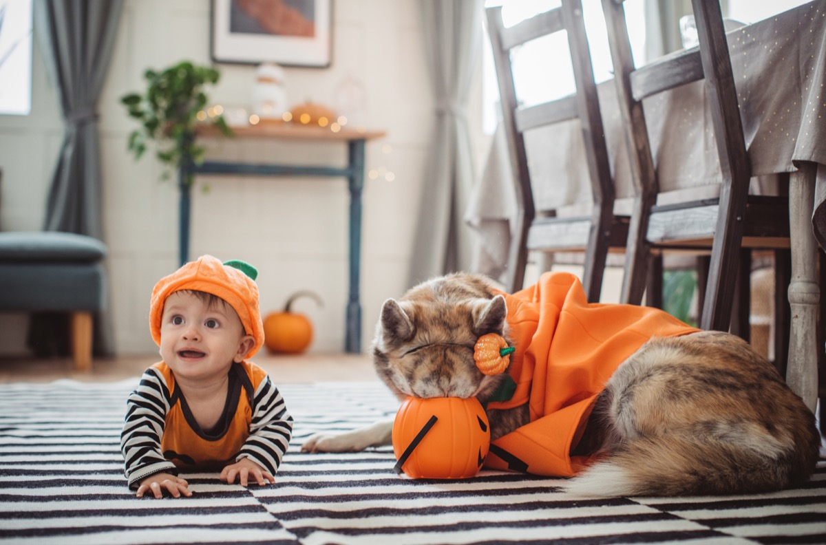 Baby and dog dressed as pumpkins for halloween