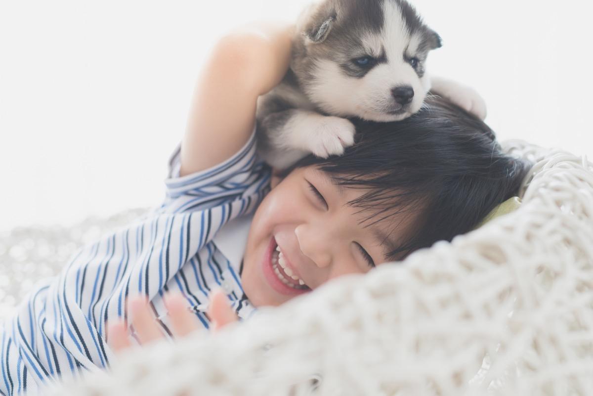 Husky pup playing with kid