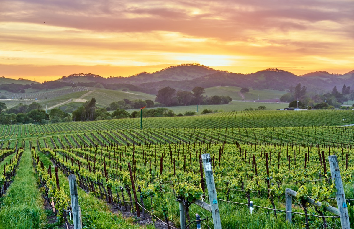 vineyards landscape napa valley california