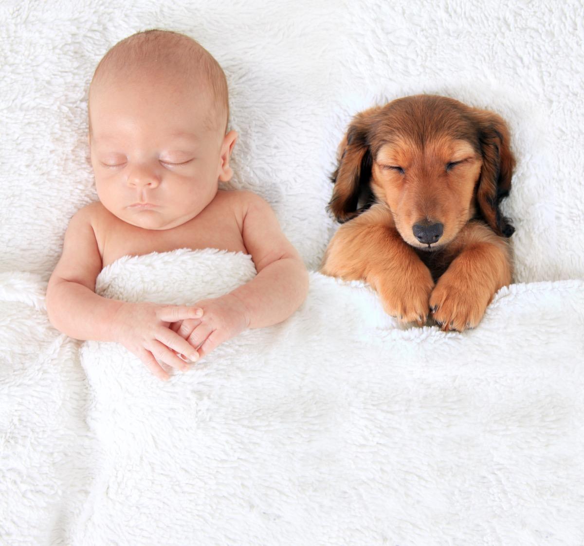 Puppy and baby napping together