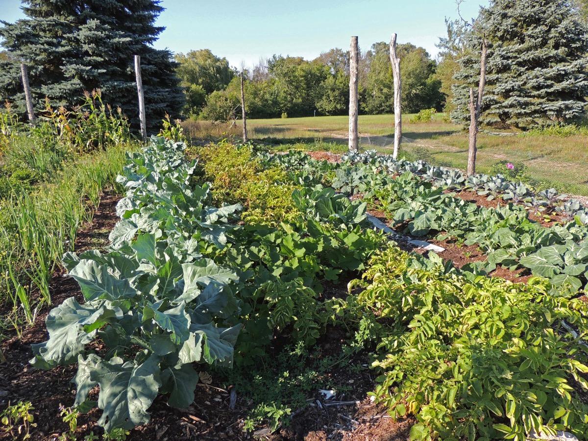 No till farming garden