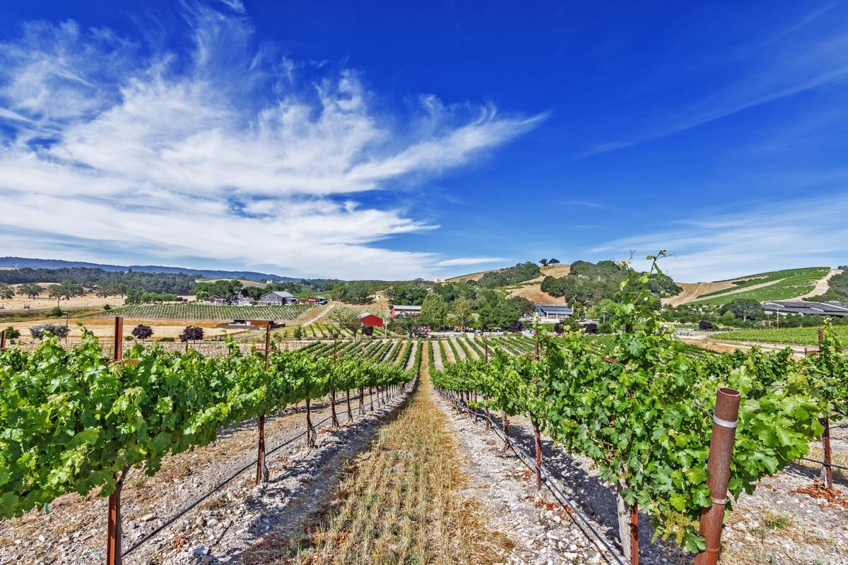 vineyard in paso robles california