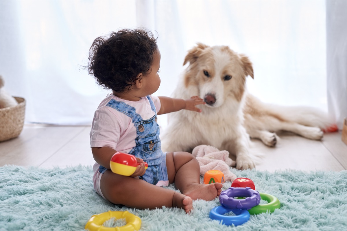 Baby sharing toys with dog