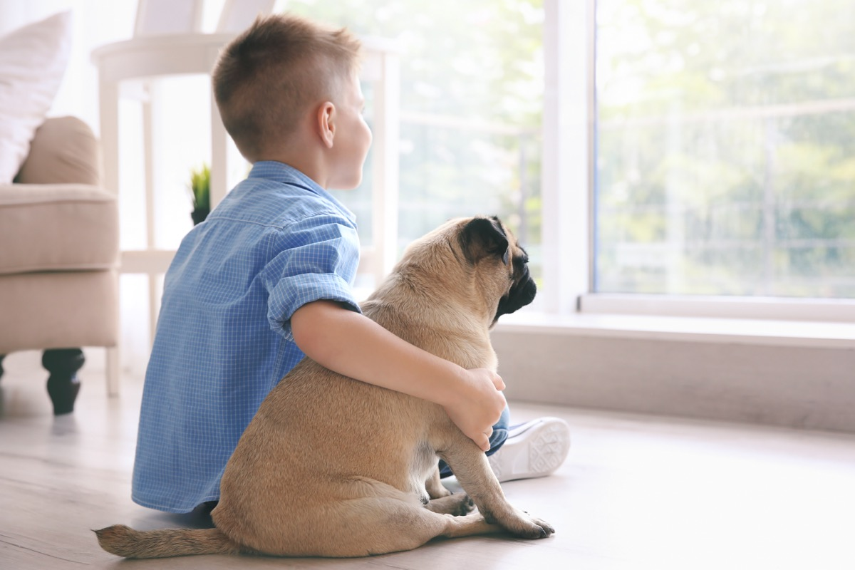 Pug and little boy looking out the window