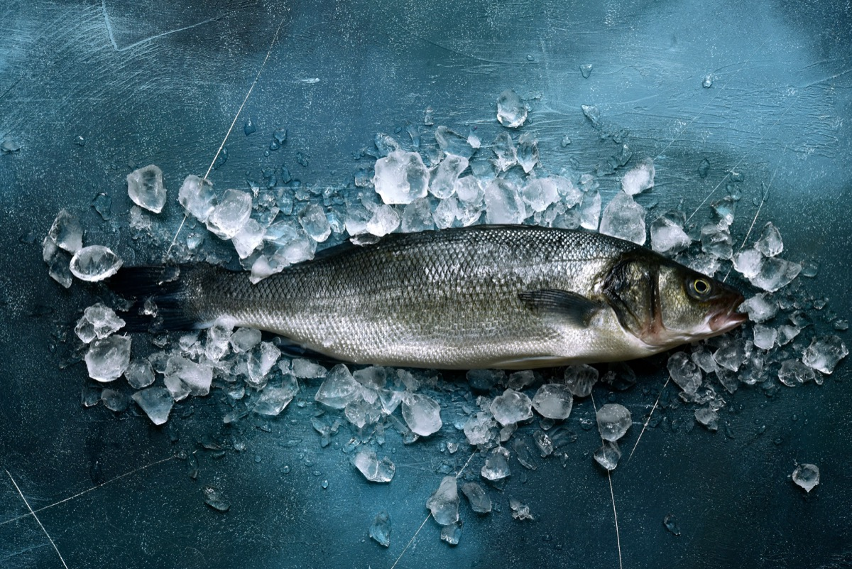 Raw sea bass over ice