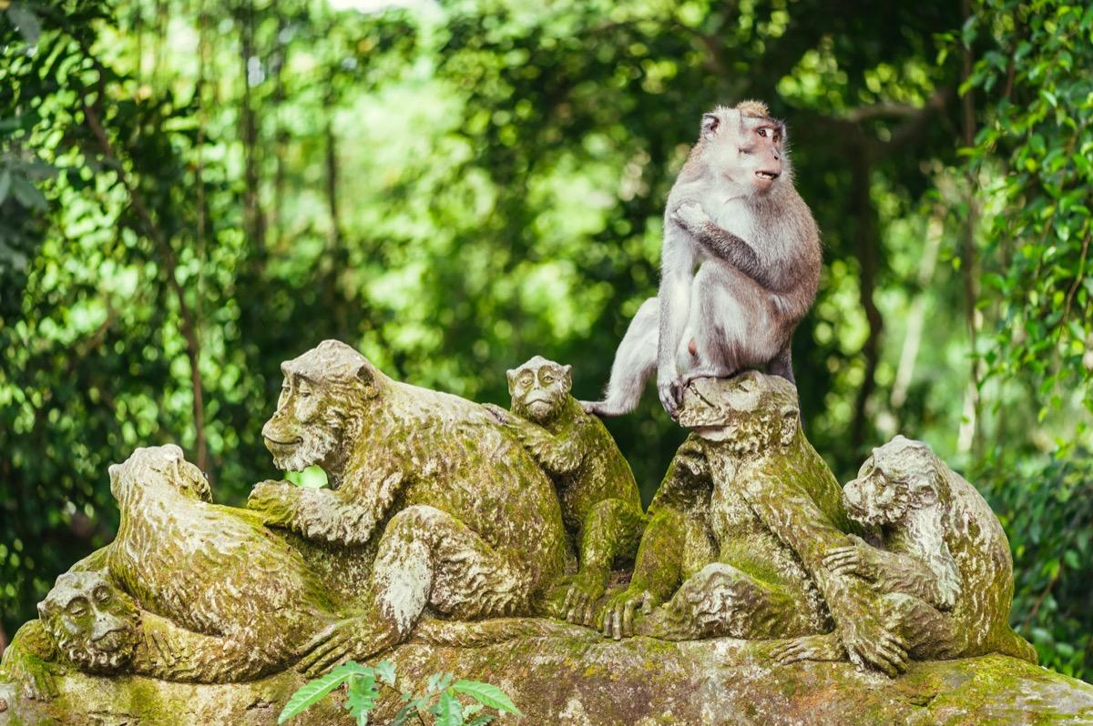 monkey on top of monkey statues in bali ubud