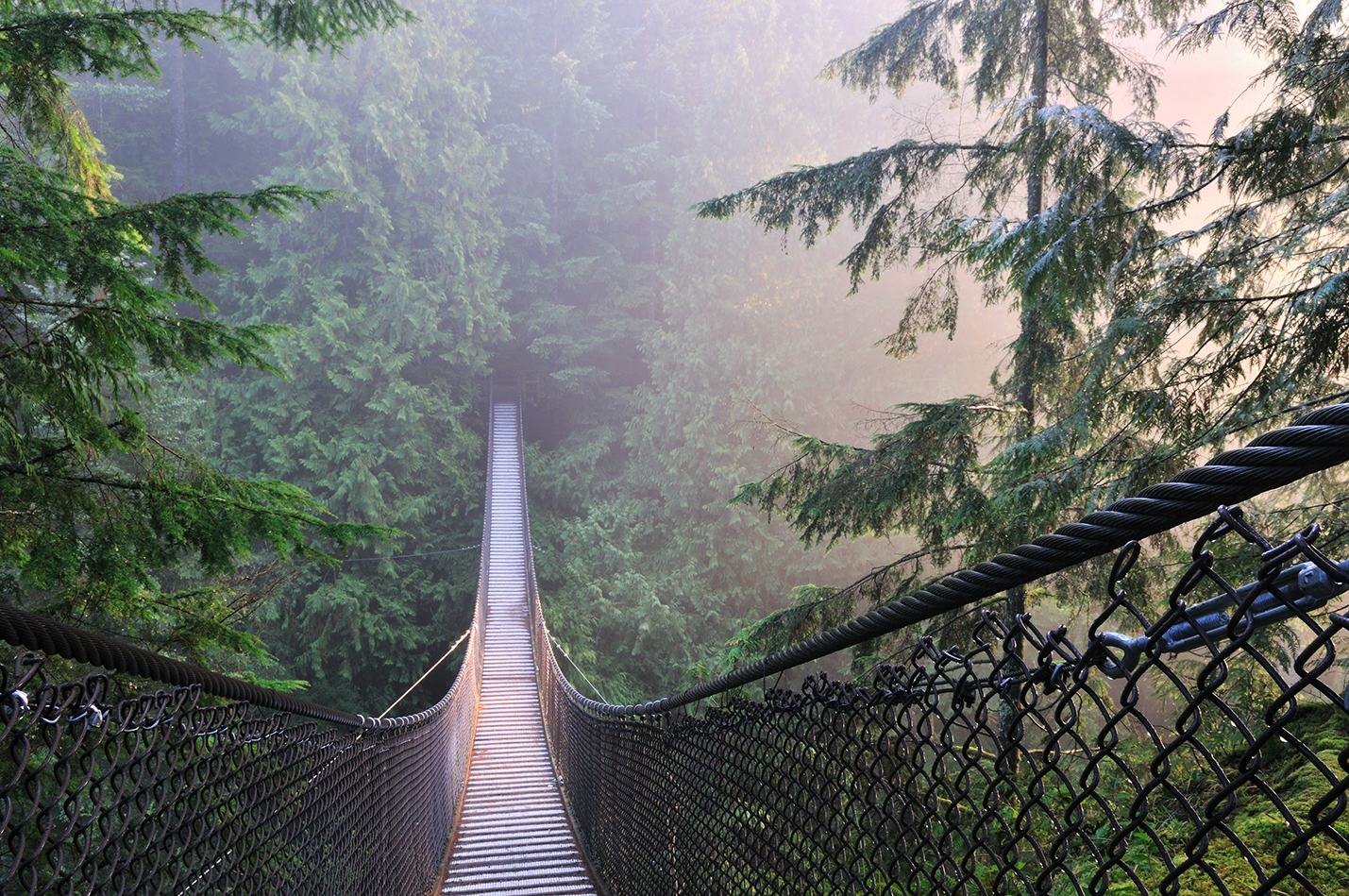 lynn canyon bridge hanging over the forest