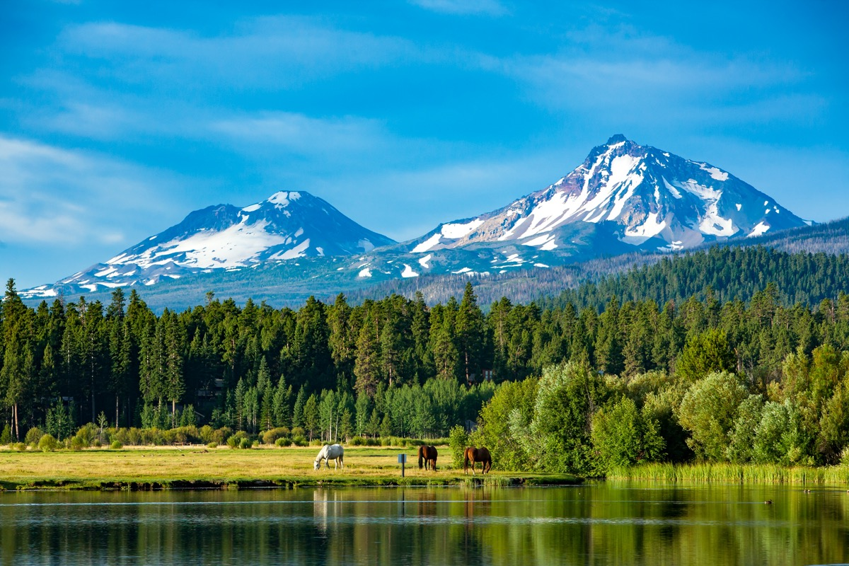 Three horses grazing in a central Oregon meadow near Sisters Oregon with the three sisters mountains in the background