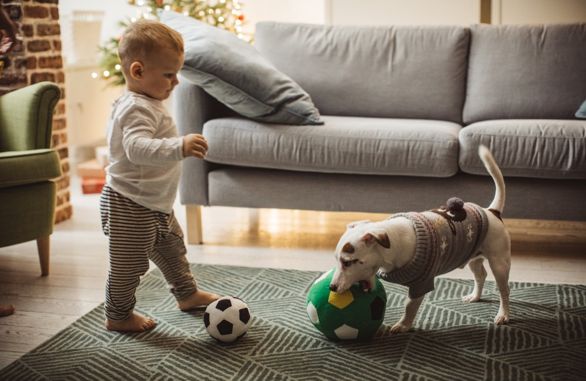 Baby playing soccer with dog