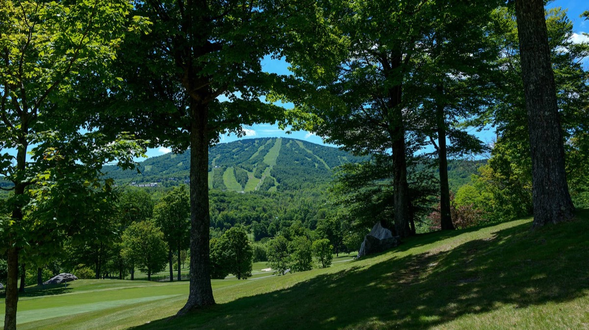 green trees and a grassy ski slope in the summer in vermont
