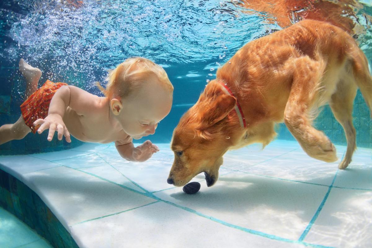 Dog and baby swimming
