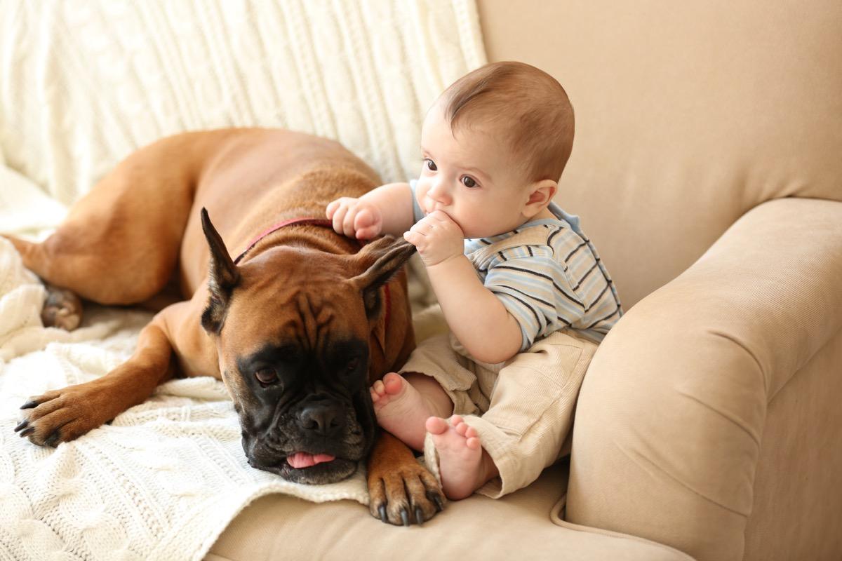 Teething baby and dog