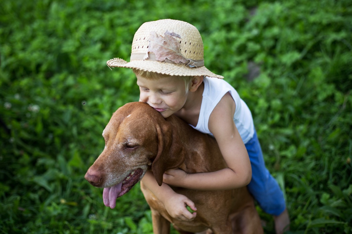 Vizsla dog with a child