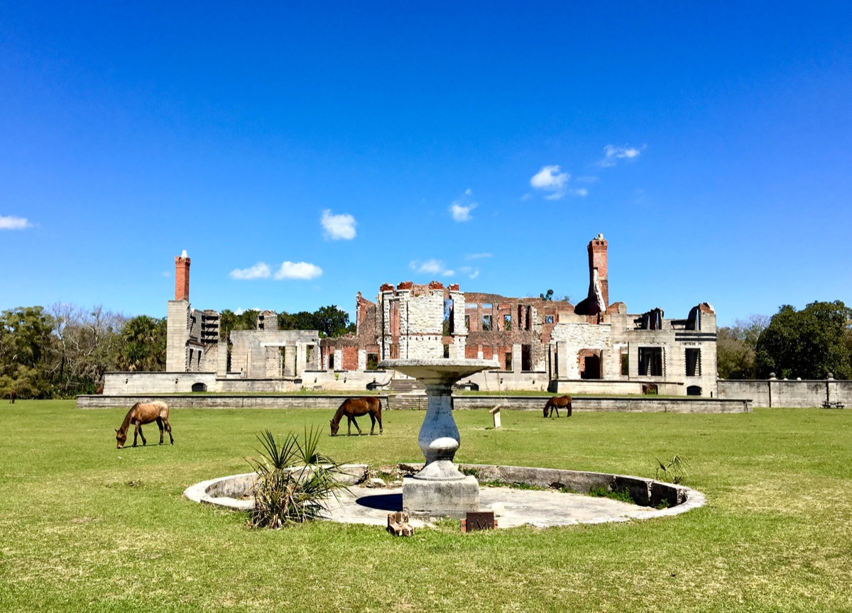 Wild horses in front of Dungeness ruins old Carnegie mansion on Cumberland Island Georgia