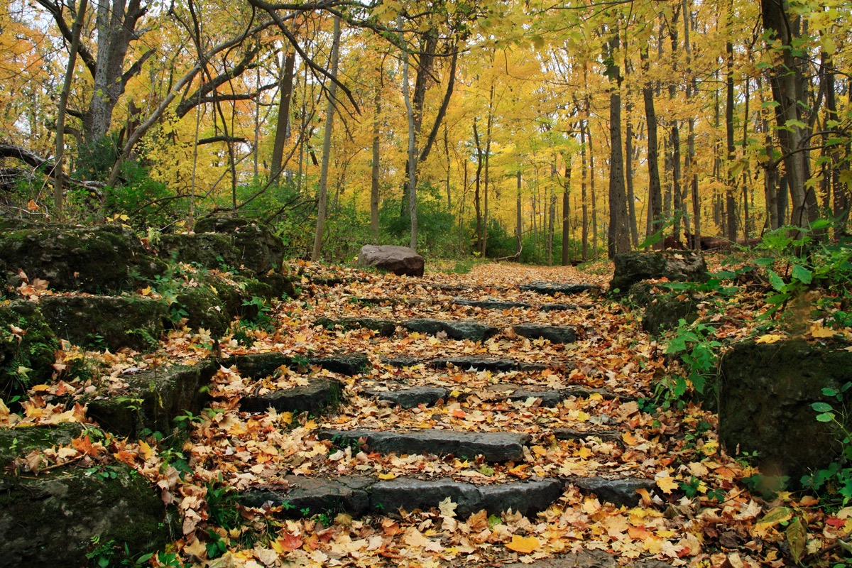 A Stone Stairway And Path Through A Forest Glen Helen Nature Preserve Yellow Springs Ohio