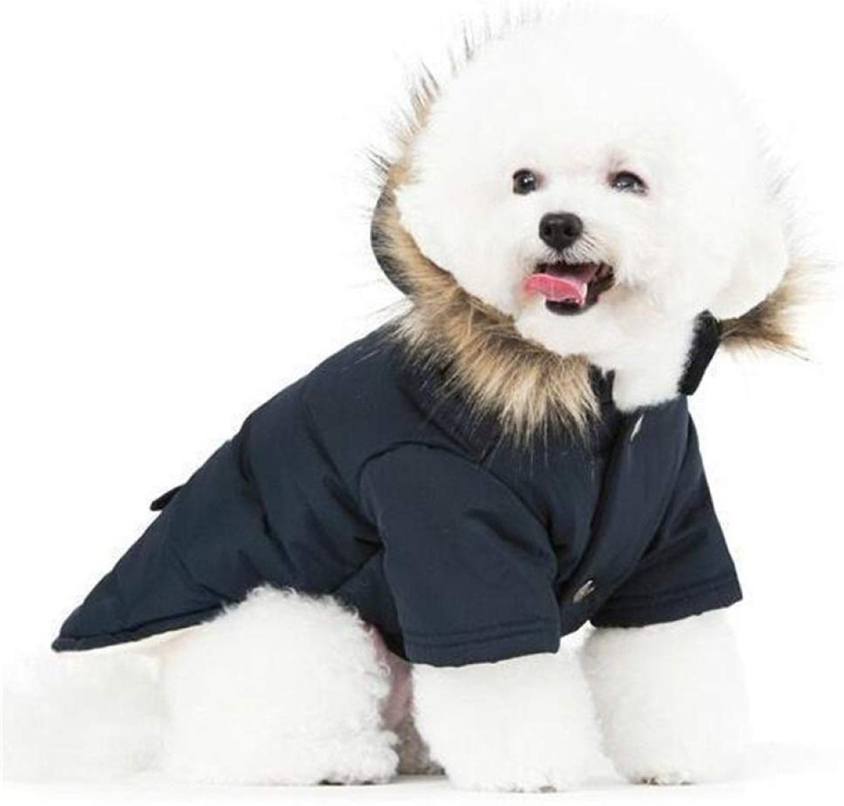 White dog wearing parka
