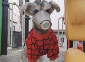 dog wearing coronavirus mask