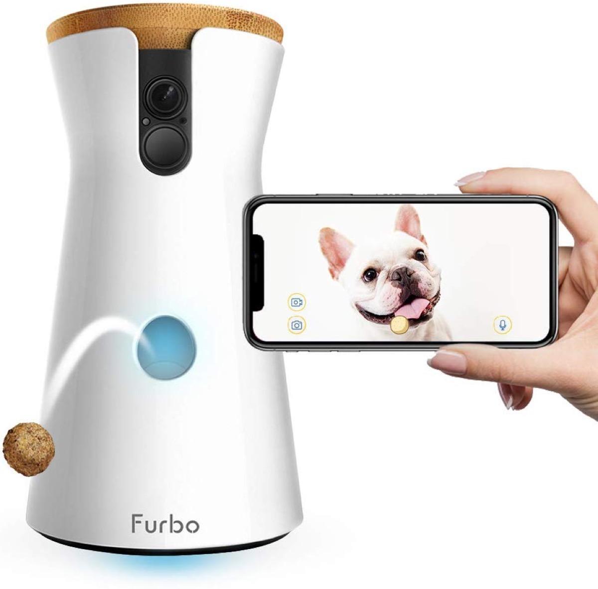Dog camera and phone with dog image
