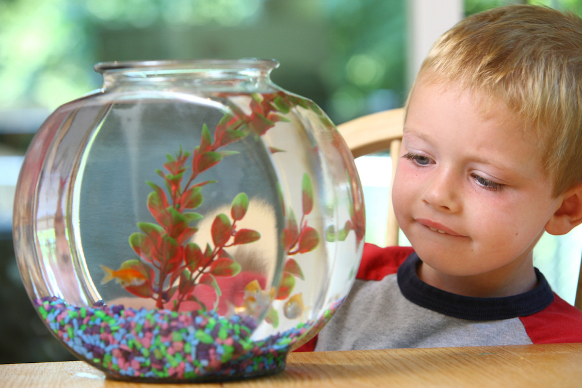 young blonde boy looking at fish tank on table