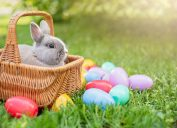 Easter bunny in a basket surrounded by eggs