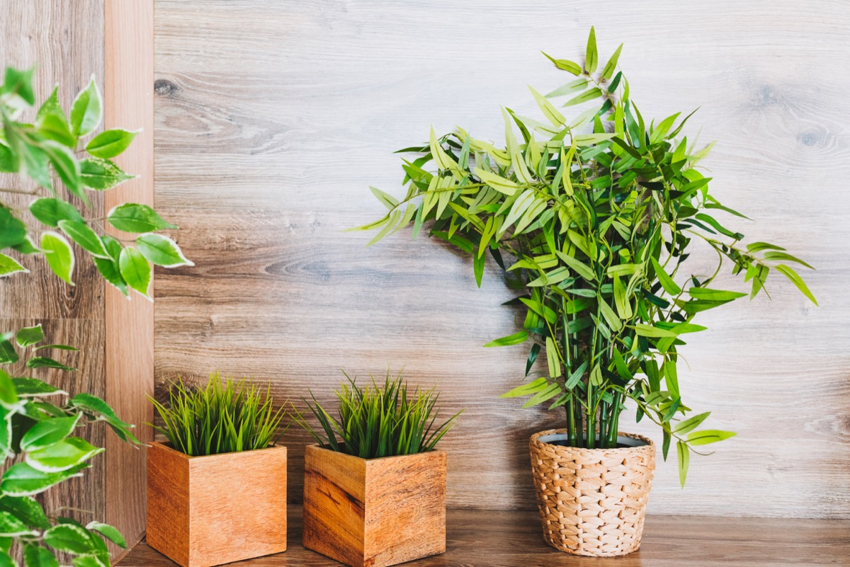 fake plants in modern room